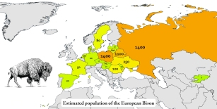 wild-bison-in-europe