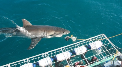 shark_tour_pic