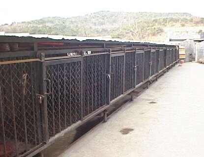china cage bears 1997