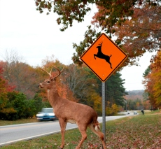 deer-crossing
