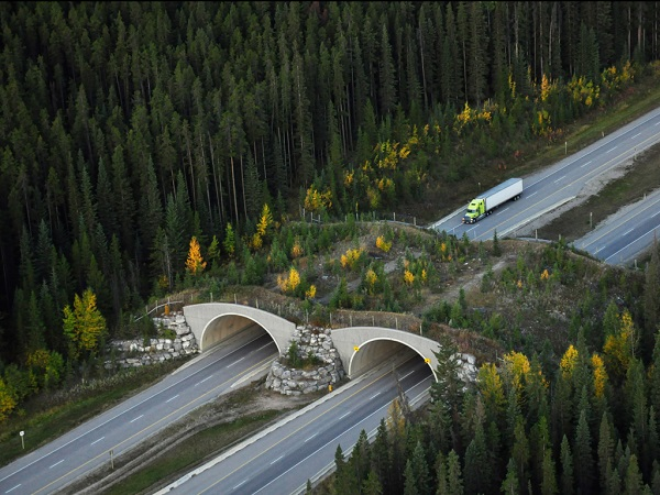 man-made-wildlife-crossing-over-highway