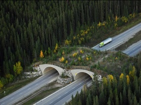 man-made-wildlife-crossing-over-highway