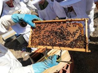 bee house 1