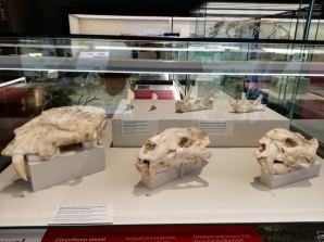megafauna 2 pleistocen