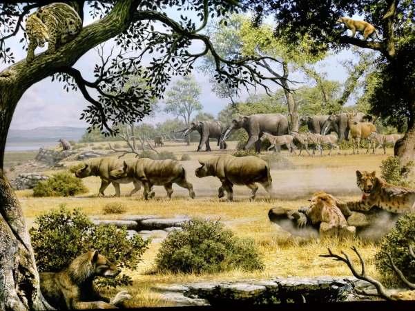 pleistocen fauna